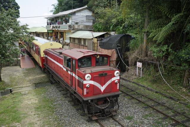 阿里山林鐵8月將推出融入當地風土、季節特色的郵輪式列車阿里山號。(林務局提供)