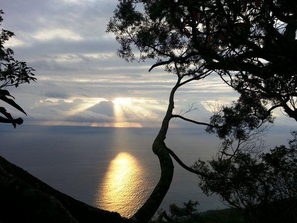 阿比每天看著太平洋日出成長。