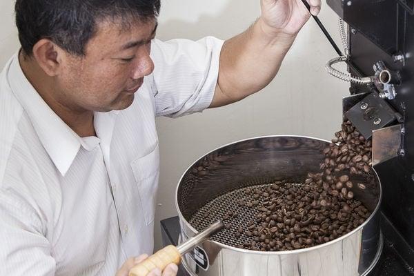 張弘典種植的阿比咖啡豆。