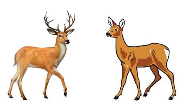 王安石其子王元澤,從小就十分聰明。客人問:「你可知哪一隻是鹿?哪一隻是獐?」他指著籠子說:「看,鹿的旁邊是獐,而獐的旁邊就是鹿啊!」(Fotolia)