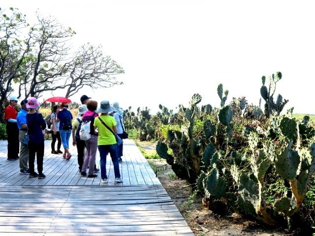 沿著海港的「踩風大道」鋪著木棧道,遊客可以沿途看海、看船、風吹日晒。(攝影/鄧玫玲)