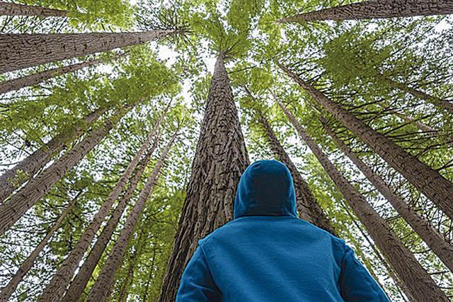 看樹可以降低心理壓力。(Fotolia)