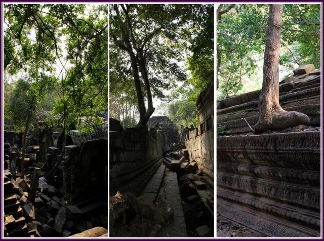 廟宇內遍布樹木,以及許多傾倒的石塊。(攝影/鄭清海)
