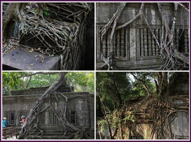 它被叢林嚴密包裹著,並且尚未大規模的修復。(攝影/鄭清海)