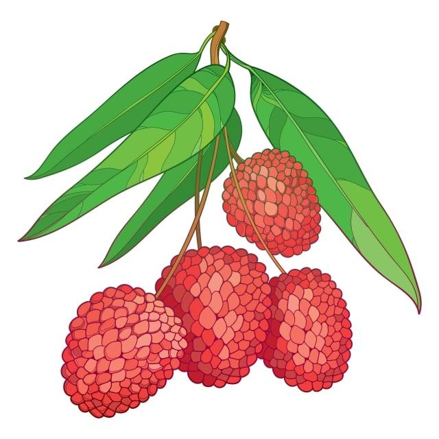 相比之下,「日啖荔枝三百顆」的蘇東坡,和我們這些能吃到隔日送達鮮荔枝的現代人,實在是太幸福了。(123RF)