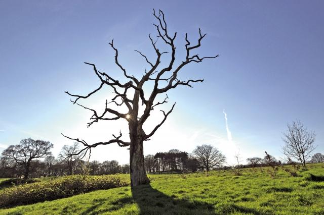 回頭再想想那些被咒罵的所羅門樹,是否會悲痛欲絕?或是怨恨人類的殘酷?(Fotolia)
