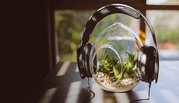 音樂使植物開心,植物長得好,人也開心。(Stocksnap/pixabay)
