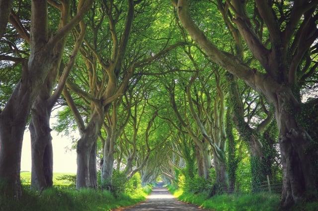 位於北愛爾蘭的黑暗樹籬。(Fotolia )
