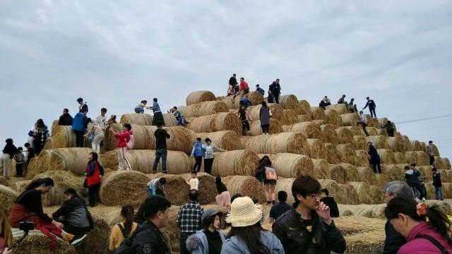 遊客爬到稻草捲上搶拍鏡頭