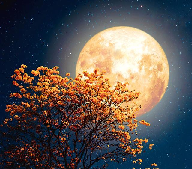 月亮懸掛在天上,散發柔和的光芒,迎著微涼的風,思緒便在月色中飛揚。(Fotolia)