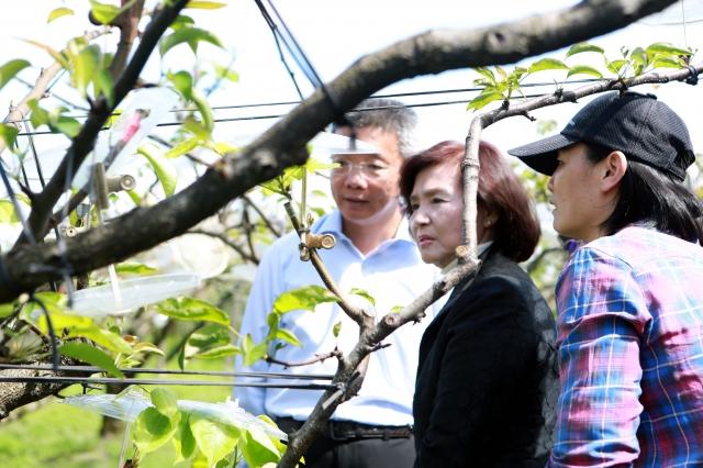 左起三星鄉長李志鏞、林姿妙縣長聽取梨農說明損害情況。