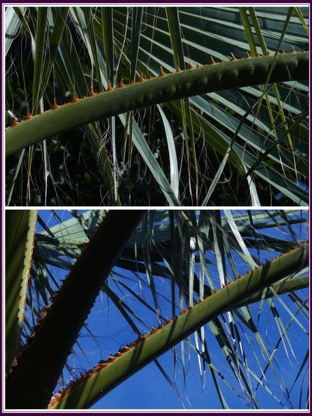 小花枝長約10公分,彎曲無毛有棱角,花單生。(攝影/鄭清海)