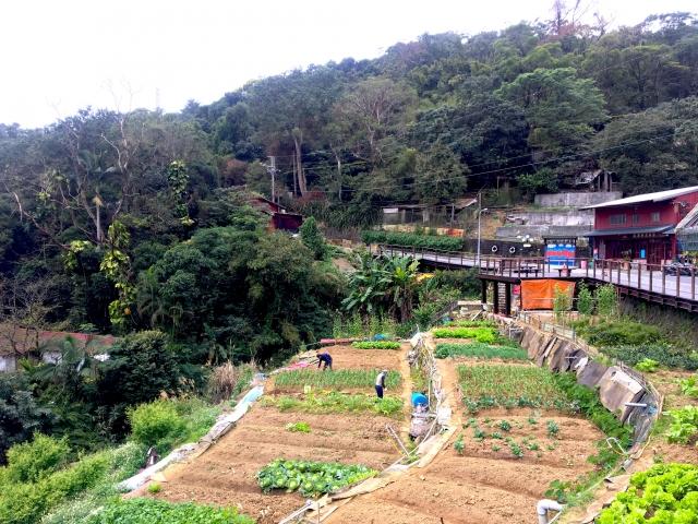 觀景台下可看到農民種植的耕地。