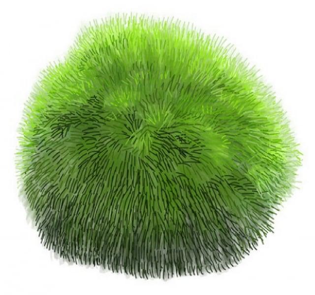 許多綠藻屬淡水培養,無鹽分過高的問題,含有大量綠藻多醣體、葉綠素、天然維生素A、B群(尤其含有素食者最容易缺乏的B12)。(123RF)