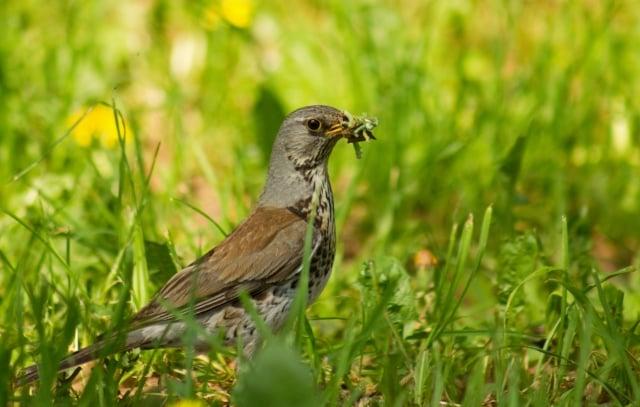 大自然的生態食物鏈被破壞,蟲子沒有鳥類和昆蟲來吃,蔬菜或樹葉就會被害蟲啃光,人類自己毀掉了非常有序的自然環境,只能靠農藥殺蟲子。(Fotolia)