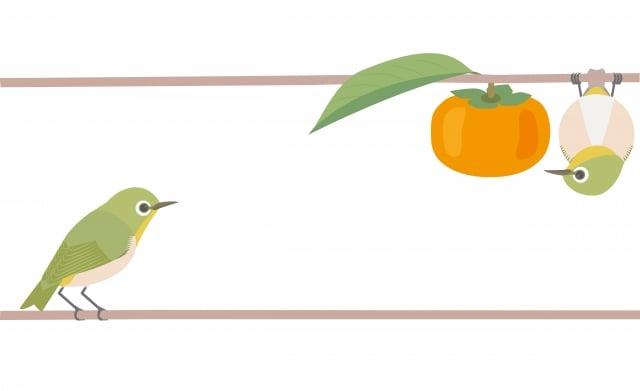 富山縣的乾柿,嘗到香甜和陽光的滋味,還多了可回憶當年異國友人的情誼。(123RF)