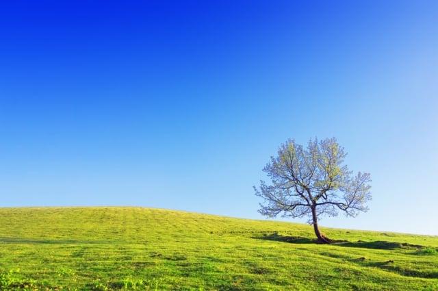 北國的山中,廣闊的天地之間,無比偉大的無限廣宇,靜靜的立著一棵平凡的小樹。(Fotolia)