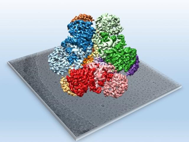 中研院冷凍電子顯微鏡中心與中央大學生命科學系合作,運用冷凍電顯技術,以原子級的解析度分析出酵素的蛋白質構造,有助於生質燃料增產。(中研院提供)