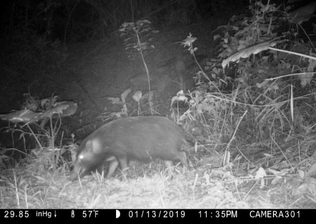 農民友善耕作,野生哺乳動物在園內穿梭。(高雄市農業局提供)