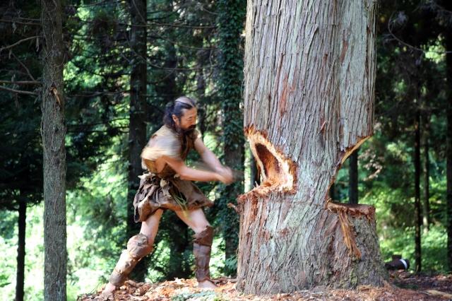 日本國立科學博物館以舊石器時代石斧實驗伐木,伐木者為工藝家雨宮國廣。