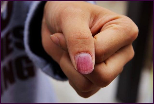 紫色雄蕊超出花冠,塗擦於指甲上為早期童玩之指甲油。(攝影/鄭清海)