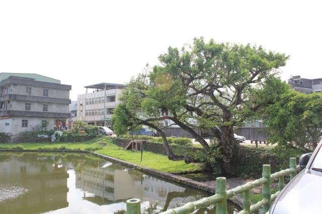 宜蘭頭城盧宅榕樹(110歲)。(福田樹木保育基金會提供)