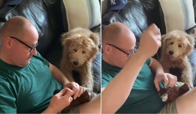 海莉說,「我爸爸很愛他的小狗。影片裡,我爸爸和Leo一起把牠最心愛的玩具縫好這一幕,是我今生中見過最純真的畫面。」(Courtesy of Hayley Alaxanian/大紀元合成)