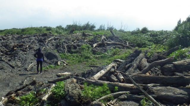蘭陽溪出海口漂流木臨時堆置現場。(羅東林管處提供)