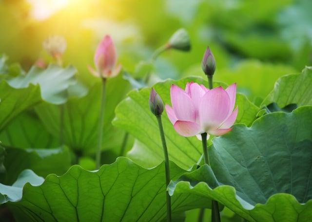 「善有善報,惡有惡報;因果循環,天公地道」相信神佛是慈悲的,在生命的最後時刻,能及時醒悟,或許來生成為有福之人。(Fotolia)