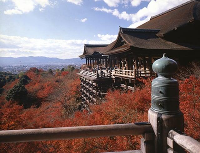 京都楓葉。(大阪觀光局提供)