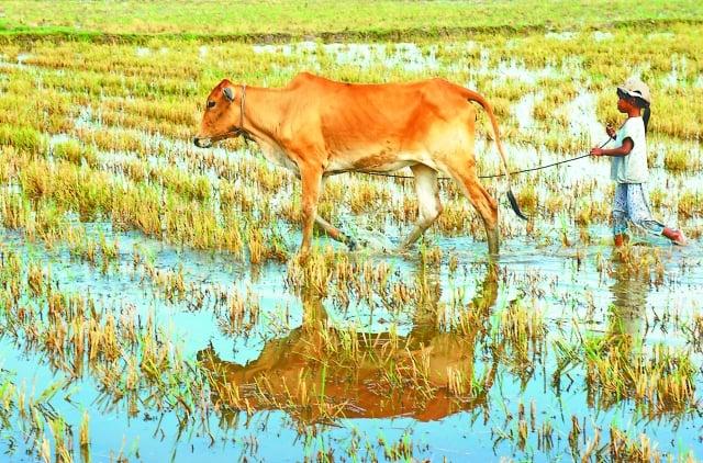 雖沒有車子接送、更沒有安親班,不過那段「放牛吃草」的懵懂時光,卻也豐富精采!(123RF)