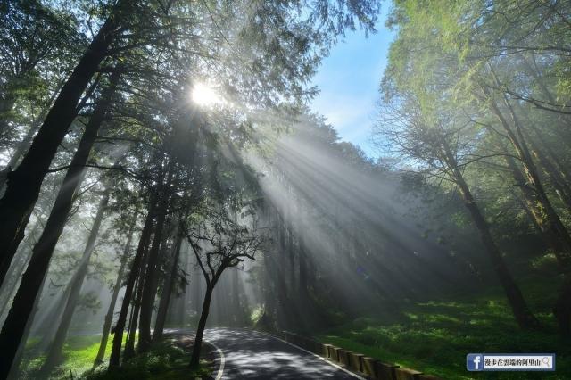 祝山林道晨間斜射光。