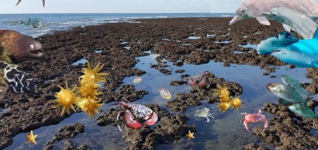 桃園在地聯盟呼籲挽救全球僅存大潭藻礁。(桃園在地聯盟提供)