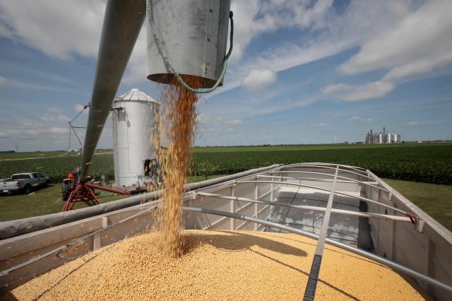 美國8月7日宣布,將16.5萬公噸大豆出售給一個神祕買家。示意圖。(AFP)