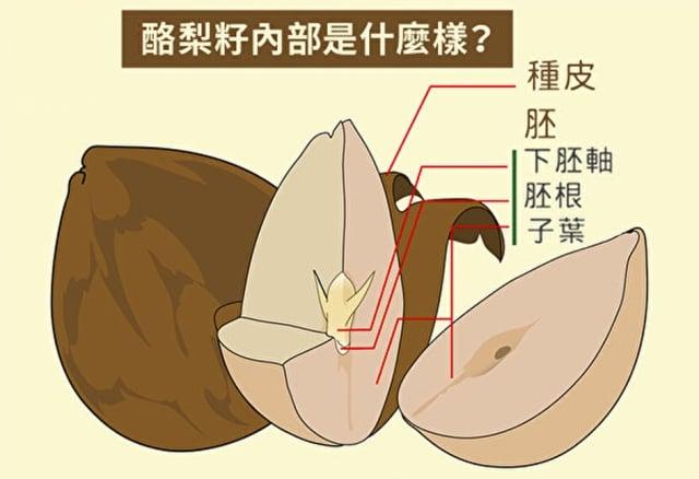 酪梨籽營養豐富,抗氧化力強。圖為酪梨籽內部結構。(Shutterstock)