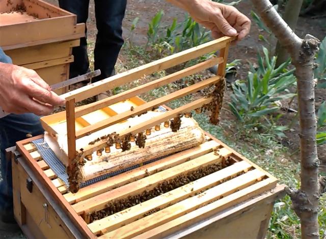 正純食品的正純蜂蜜,除了蜂蜜外,還有花粉、蜂膠、蜂蠟、蜂王乳。(正純食品提供)