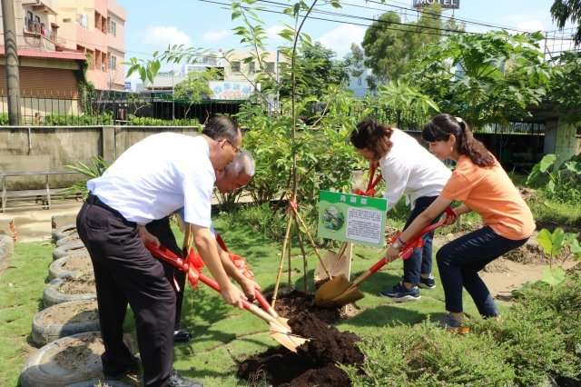 與橡木子同科的青剛櫟由市長黃敏惠等貴賓植栽在校園內,培養土豐富的養份將滋養著青剛櫟早日成長茁壯。