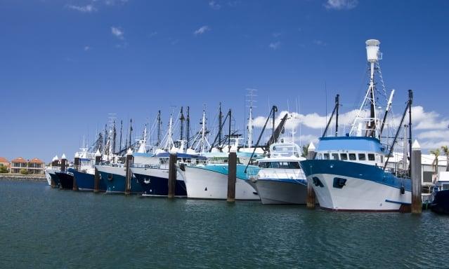 澳洲林肯港的瘋鮪魚節,便能品嘗產地直送的餐點與世界上最新鮮的海鮮外,並觀賞聞名世界的「鮪魚投擲競賽」。(業者提供)