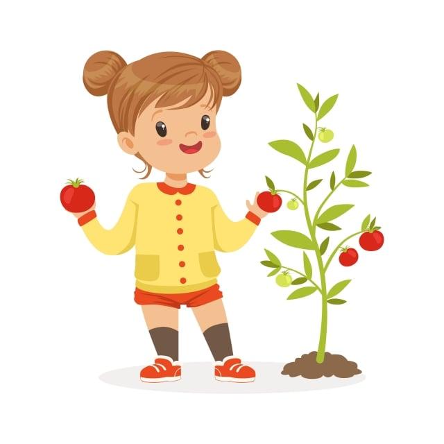 小番茄帶來的大驚喜,有這麼大的後續效應,而我們有了口福,都要感謝小番茄有如此韌性的生命力。(123RF)