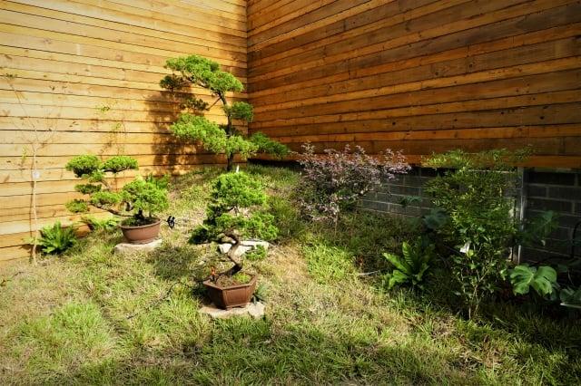 「上水一瓢」庭園中種植了澳洲jacaranda樹及昆士蘭州花-藍花瑩,再以「小山丘上的一棵樹」和「樹皮鋪滿土壤」的花園景觀來搭配。