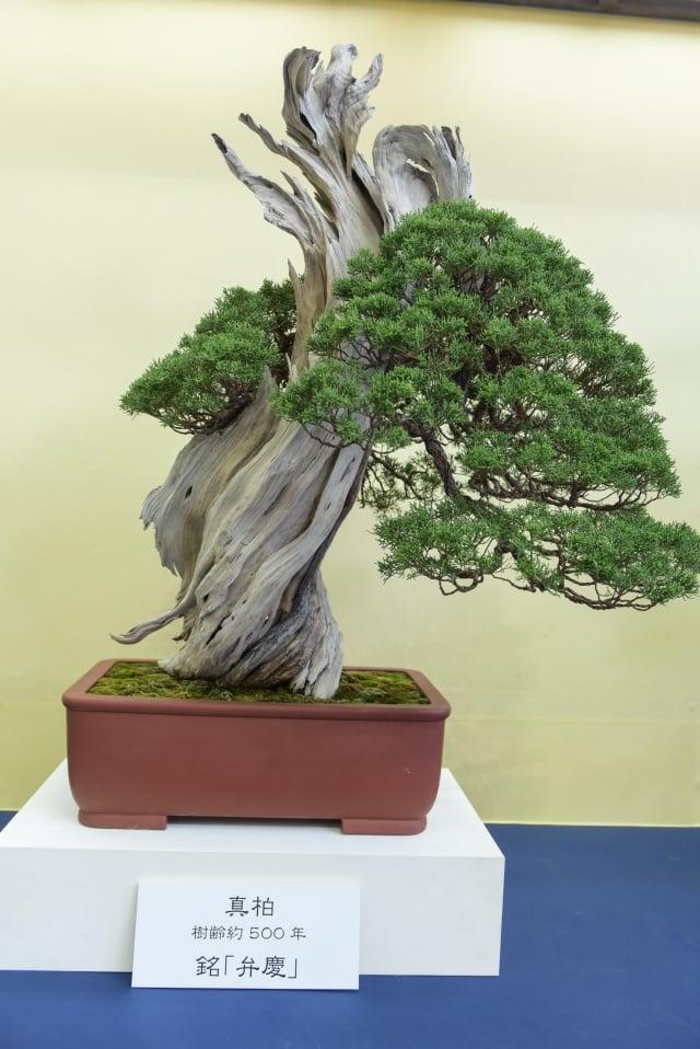 日本盆栽藝術。(攝影/盧勇)