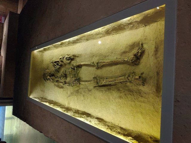 目前台灣本島發現最早的人類骨骸「台灣第一人」,是在南科挖掘出的大坌坑文化人,距今約5,000年。(攝影/賴友容)