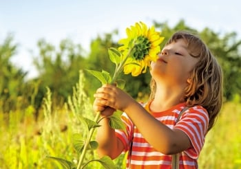 燦爛向日葵 從種子到花瓣一身是藥