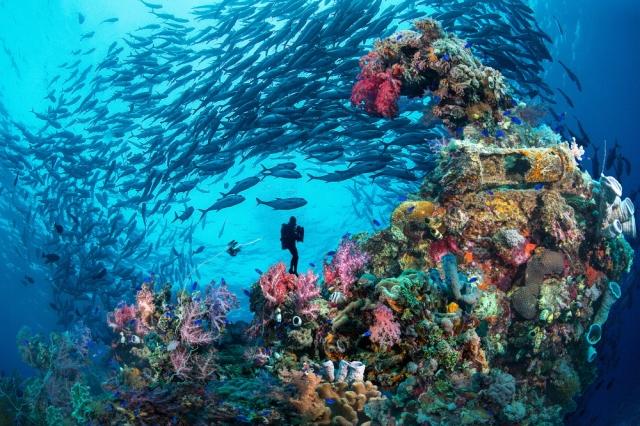 悠遊壯觀的海底世界。(菲律賓觀光部台灣分處提供)