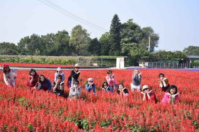 來自馬來西亞的遊客開心地在「一串紅」的花田中拍照。(記者賴瑞/攝影)