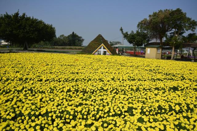 數大即是美的大片金黃色萬壽菊。(記者賴瑞/攝影)