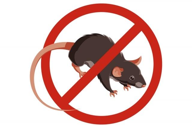 鼠疫是一種感染性疾病,由鼠疫桿菌引發,症狀包括發燒、虛弱、頭痛。19世 紀,黑死病又在歐洲爆發。最近北京、內蒙古也先後出現鼠疫病例。(123RF)