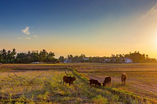 故鄉,對他們或有不同的詮釋,但相同的卻是大家都有一份無法割捨的戀棧與忘情。(Pixabay公有領域)