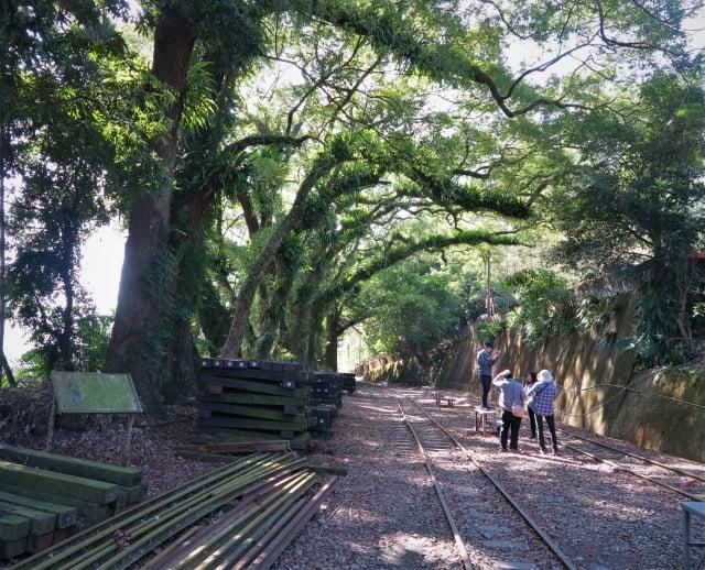 海拔543公尺,曾經是台灣天然樟腦製造的聚落,如今到了樟腦寮車站,只能見到幾棵被藤蔓纏繞的樟樹。
