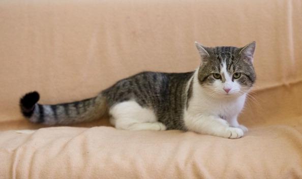 其實,貓也常因為情緒而改變瞳孔大小。(Getty Images)